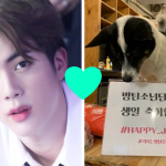 jin et chien