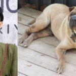 gdragon chien